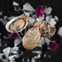 Kusshi Oysters featured on a black background with broken shells, ice, and petals